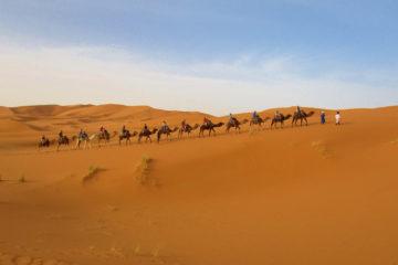 passeio de camelo no deserto do sahara em Merzouga