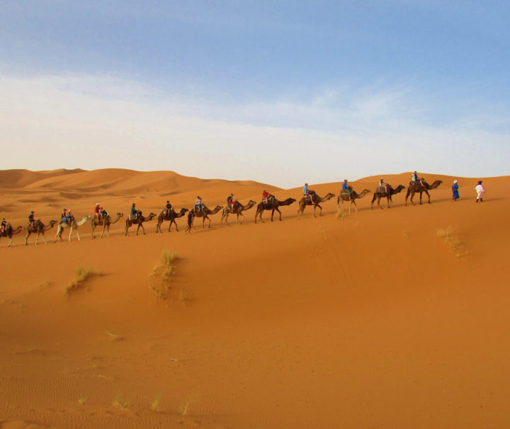 a camel ride in the sahara desert in merzouga