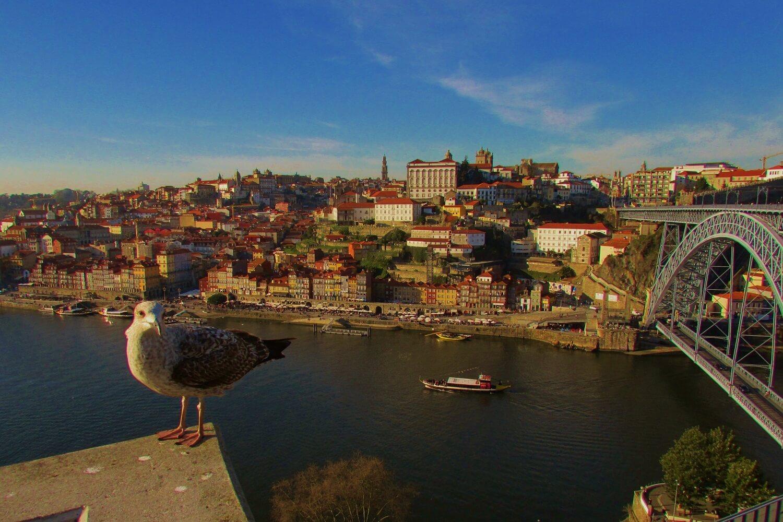 uma gaivota e a vista sobre a cidade do porto