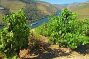 cruise at douro river and vineyards