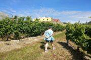 Vinho Verde Tour