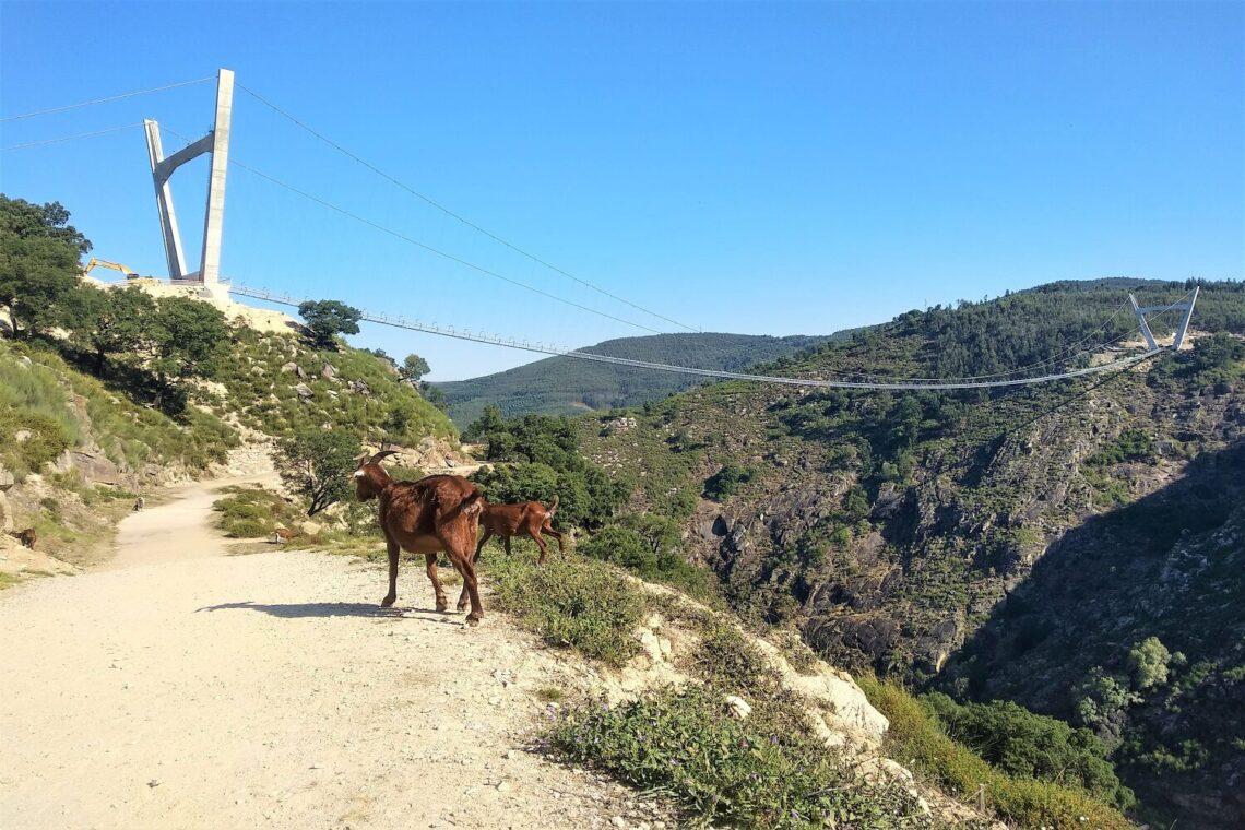 paiva-walkways-tour